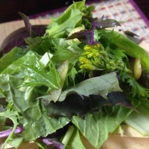 チーノのオリエンタルサラダMIX。 水菜のクルミのような味と、ほろ苦い蜜を蓄えた花が甘くて美味~。